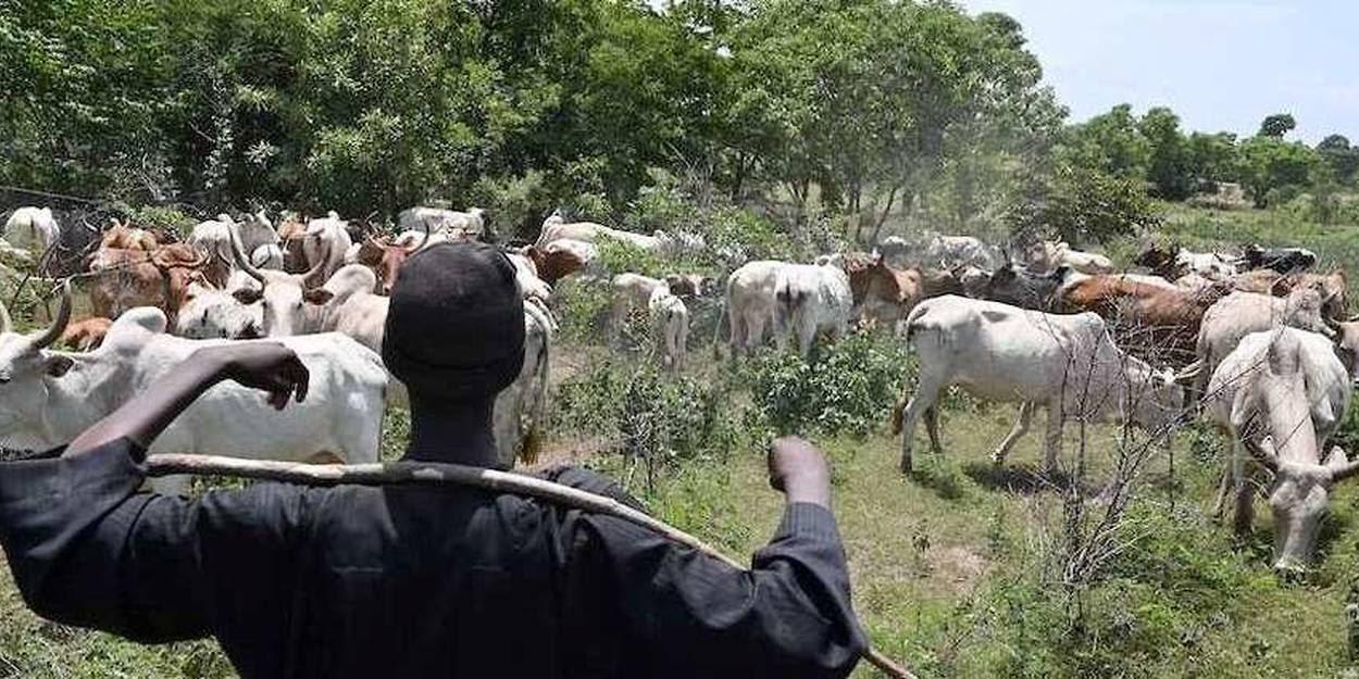 C\'est un marché de bétail qui a été attaqué dans l\'est du Burkina Faso. Ici, la photo d\'illustration d\'un troupeau et de son berger dans le Sahel.